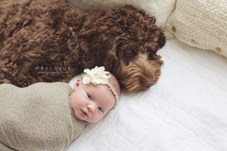 Newborn baby photo with dog